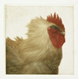 Coq I (Rooster)--sold