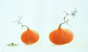 mikio_nouvellesrecoltes_crop